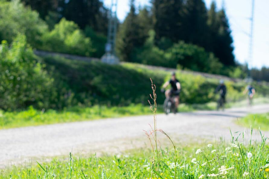 Auf dem Fahrrad den Schwarzwald entdecken